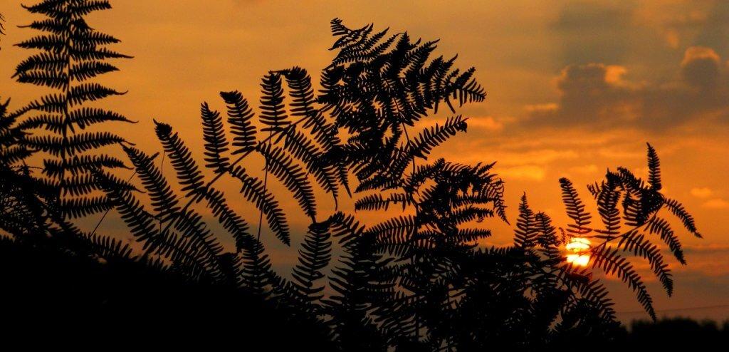 sunrise-tan vakti- gün doğumu